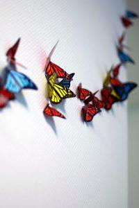Adic_Monarchvlinders