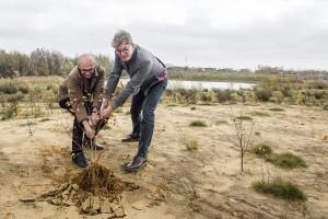 Wim Ariens (Wienerberger) en gedeputeerde Rik Röttger verwijderen een jonge berk om ruimte te geven aan heide. © Klaas De Scheirder ThinkSmart voor provincie Antwerpen