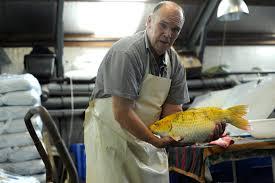 bijnens viskwekerij